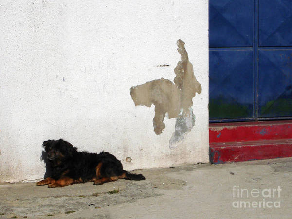 Photograph - It's A Dog's Life by Menega Sabidussi
