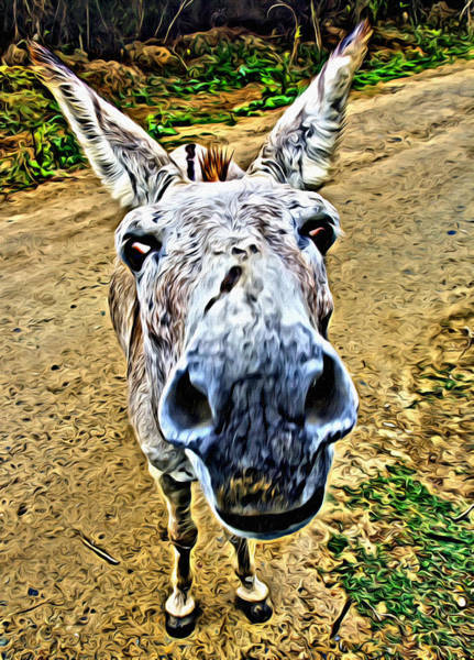 Photograph - Its A Donkey Thing by Alice Gipson