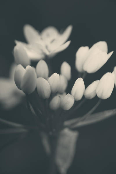 Monotone Photograph - It's A New Life by Laurie Search