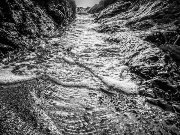 Photograph - It's A Rush Browns Beach  by Roxy Hurtubise