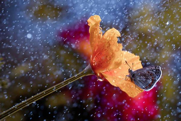 Blue Flower Photograph - It's Raining Again by Fabien Bravin