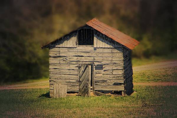 Photograph - Itsy Bitsy Cabin by Ericamaxine Price