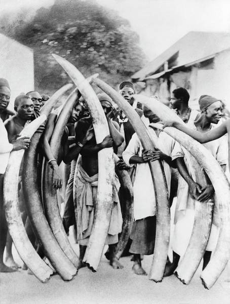 Tusk Wall Art - Photograph - Ivory Trade In Africa by Library Of Congress