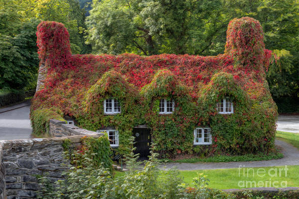 Conwy Photograph - Ivy Cottage by Adrian Evans