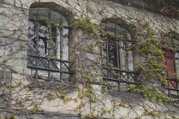 Charnel Photograph - Ivy Covered Mausoleum Windows by Valerie Collins