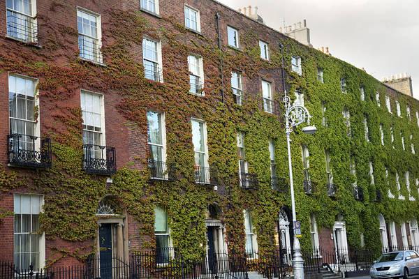 Wall Art - Photograph - Ivy Dublin Ireland by Betsy Knapp