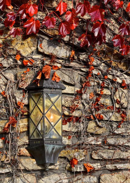 Abode Photograph - Ivy Lantern by Frozen in Time Fine Art Photography