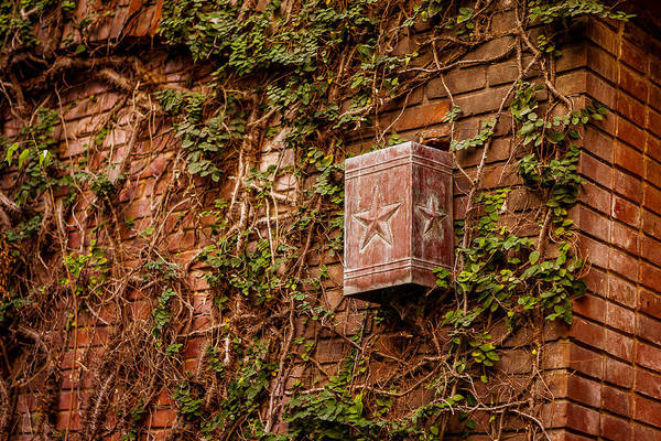 Photograph - Ivy League Star by Melinda Ledsome