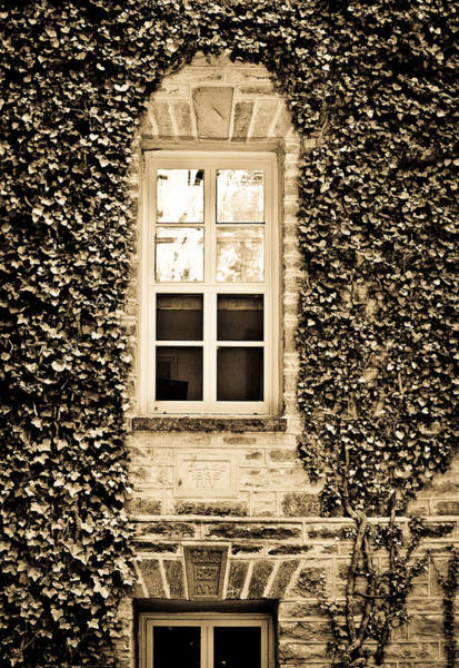 Wall Art - Photograph - Ivy Windows In Sepia - Princeton University by Colleen Kammerer