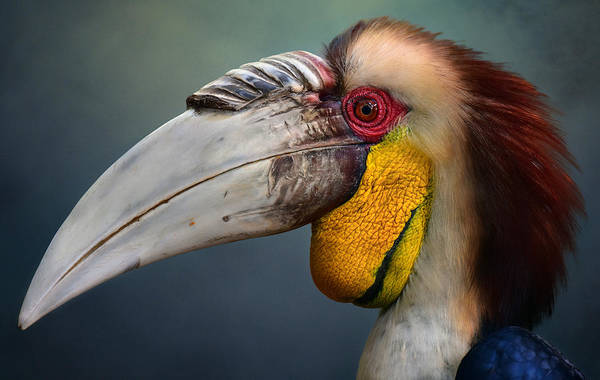 Beak Photograph - Jabrix by Fahmi Bhs