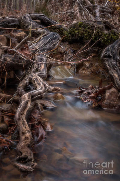 Photograph - Jack Creek 2 by Larry McMahon