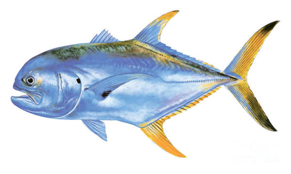 Mako Painting - Jack Crevalle by Carey Chen