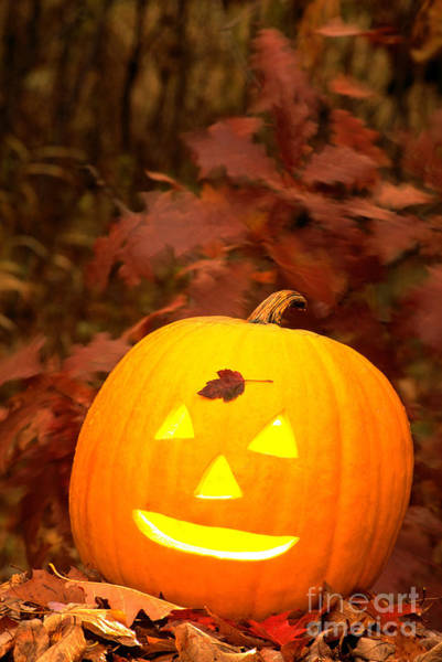 Photograph - Jack O Lantern In Woods by Larry West