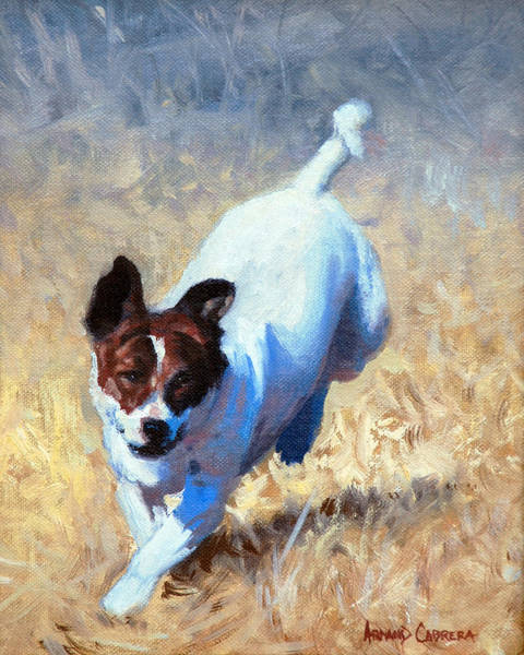 Mutt Painting - Jack Russell Bounce by Armand Cabrera