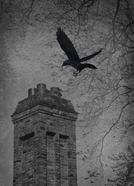 Rook Photograph - Jackdaw Flying To Chimney by Amanda Elwell