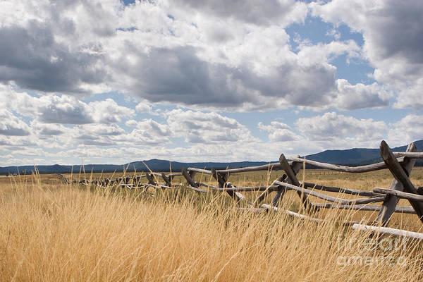 Jackleg Photograph - Jackleg Fence In The Desert by Cindy Singleton