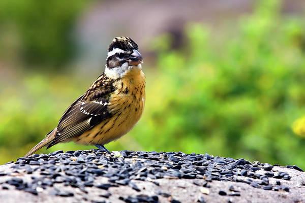 Wildbird Photograph - Jackpot by Lana Trussell