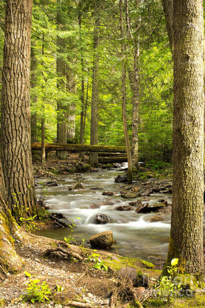 Photograph - Jackson Creek - Among The Cedars by Beve Brown-Clark Photography
