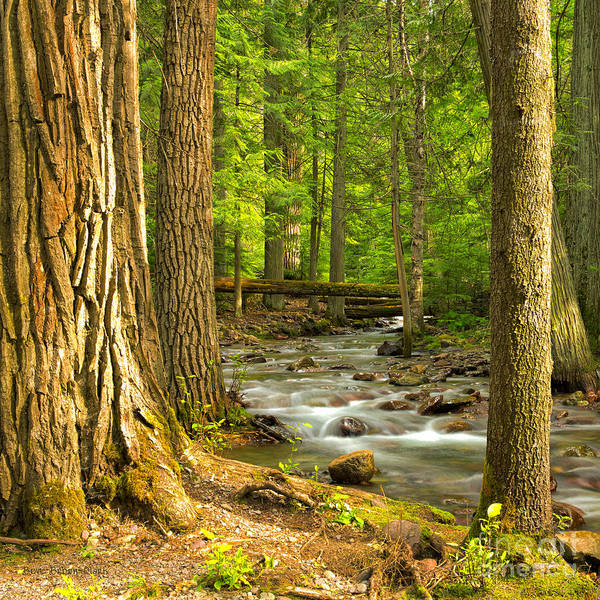 Jackson Creek Art Print