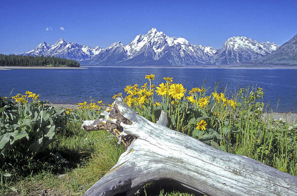 Photograph - Jackson Lake by Jim Dollar
