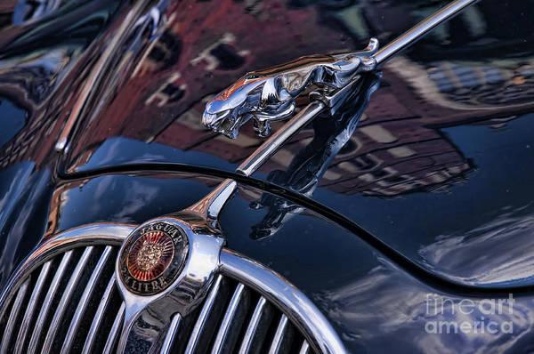 Photograph - Jaguar by Brenda Kean