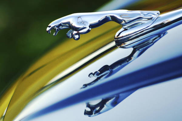 Wall Art - Photograph - Jaguar Car Hood Ornament by Jill Reger