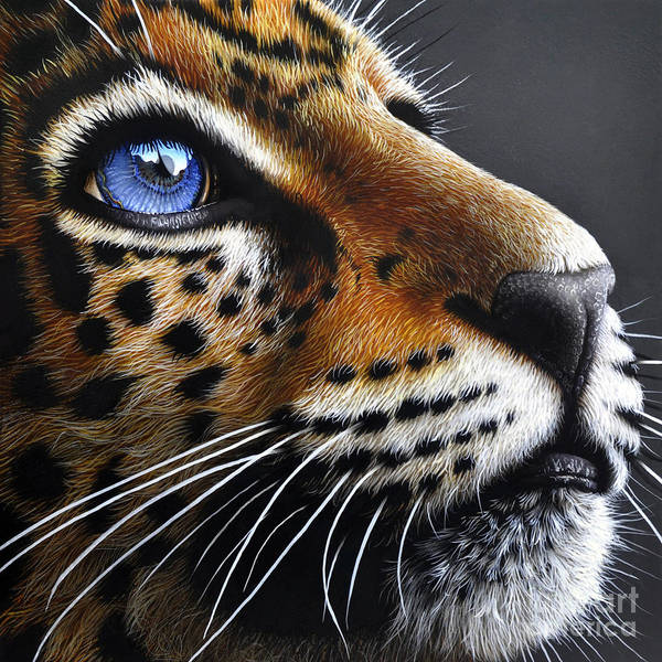Big Cat Wall Art - Painting - Jaguar Cub by Jurek Zamoyski