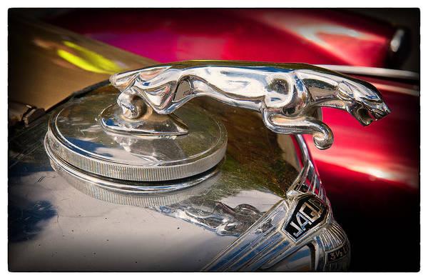Ballston Spa Photograph - Jaguar by Julie Palyswiat
