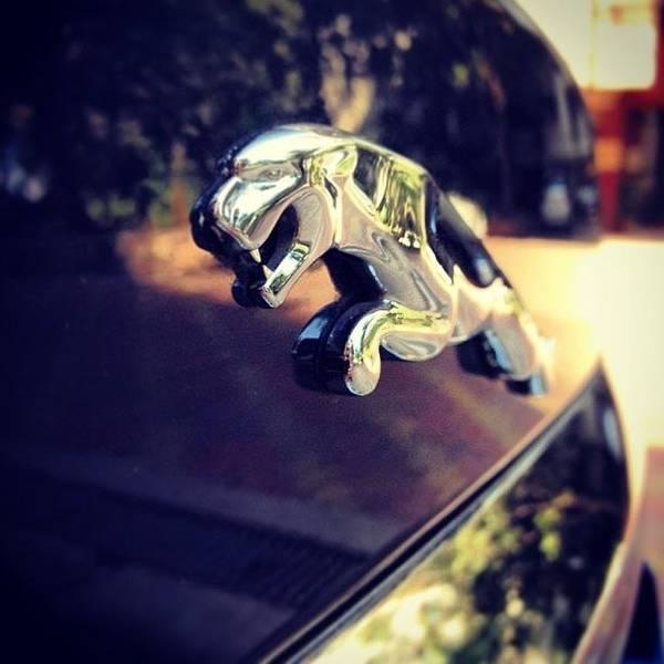 Jaguar Photograph - Jaguar Logo Shot By @k2kelkar #cat by Rachit Hirani