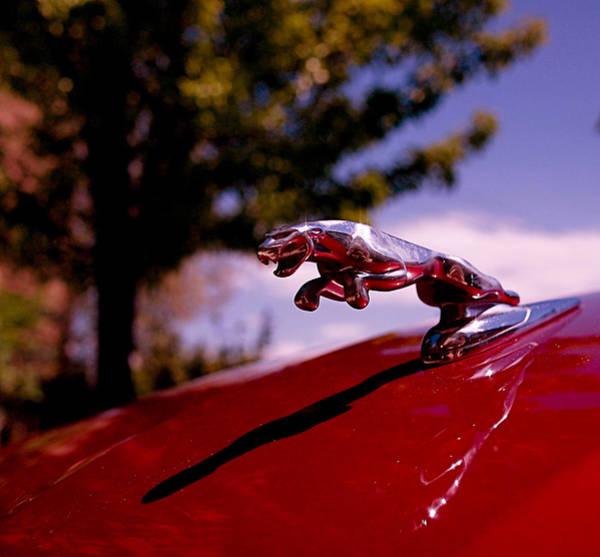 Photograph - Jaguar by Rona Black