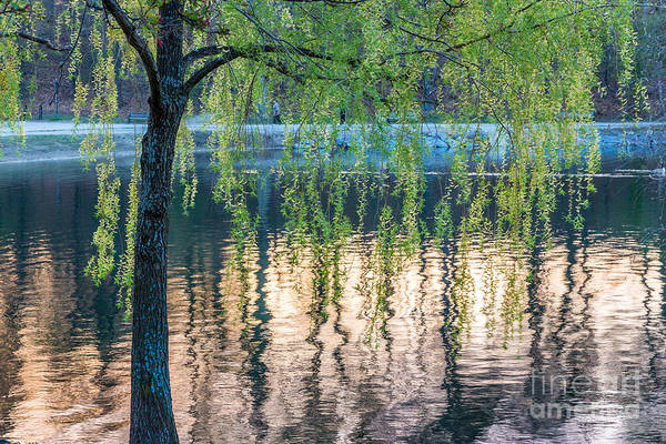 Photograph - Jamaica Pond Reflections by Susan Cole Kelly