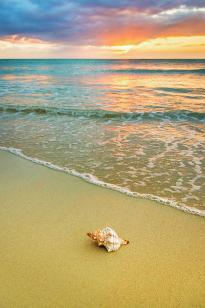 Jamaica Photograph - Jamaica, Shell On Beach At Sunset by Tetra Images