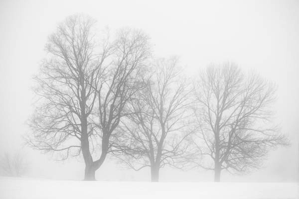 Photograph - January Fog by Robert Clifford