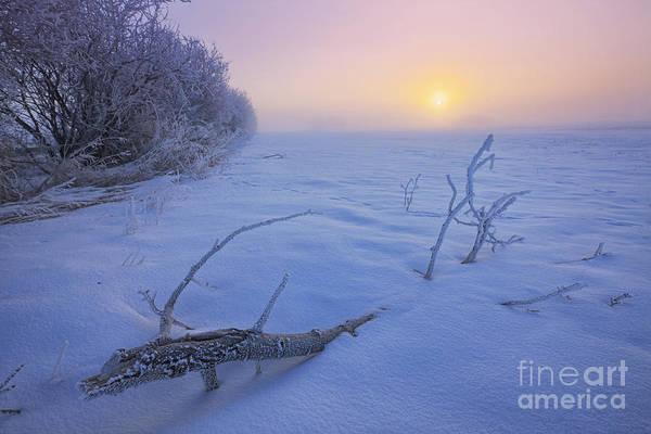 Hoar Photograph - January Freeze by Dan Jurak