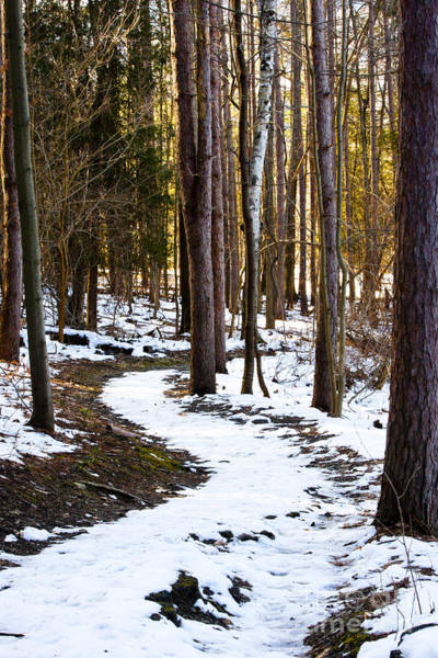 Woodlot Photograph - January Thaw 2 by Roger Bailey