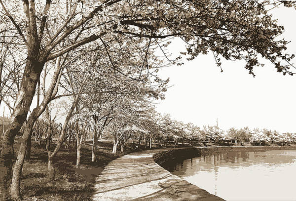 Wall Art - Drawing - Japanese Cherry Blossoms, Cherry Trees, Waterfronts by Litz Collection