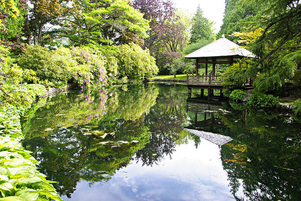 Photograph - Japanese Garden Pond by Marilyn Wilson