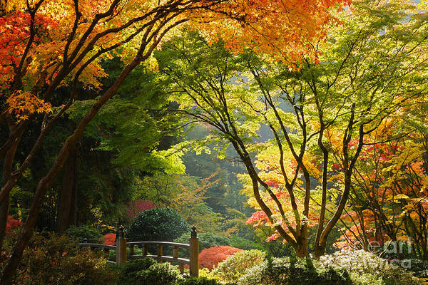 Portland Photograph - Japanese Garden by Tom Schwabel