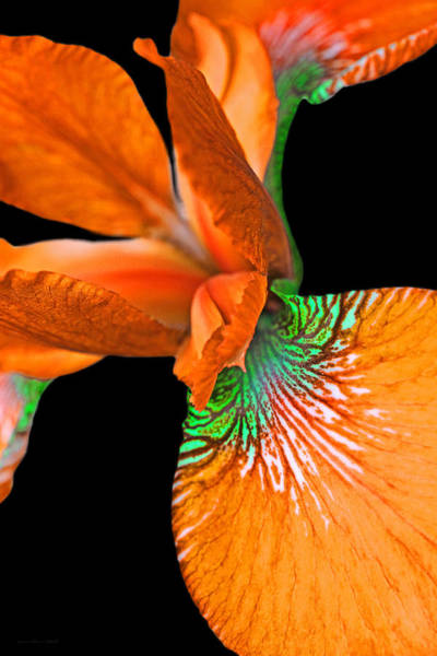 Wall Art - Photograph - Japanese Iris Orange Black Two by Jennie Marie Schell