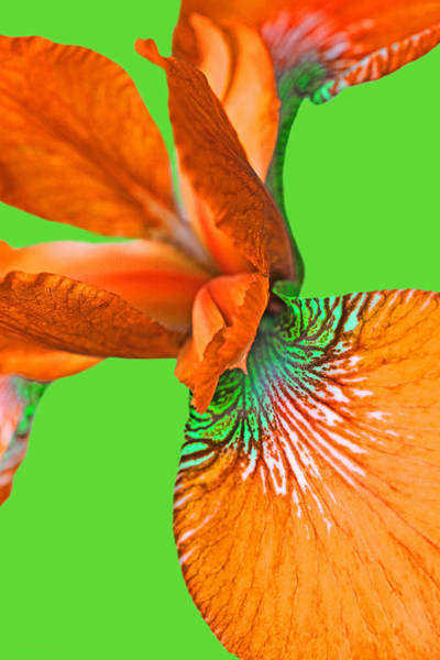 Wall Art - Photograph - Japanese Iris Orange Green Two by Jennie Marie Schell
