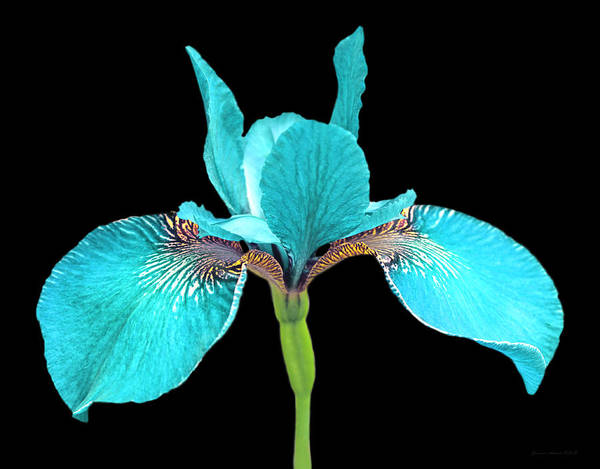 Wall Art - Photograph - Japanese Iris Turquoise Black Three by Jennie Marie Schell
