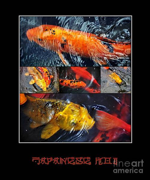 Ornamental Fish Photograph - Japanese Koi by Kaye Menner