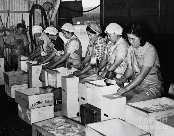 Photograph - Japanese Ladies Pounding Abalone Monterey California Circa 1939 by California Views Archives Mr Pat Hathaway Archives