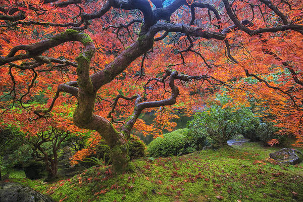 Visit Photograph - Japanese Maple Tree by Mark Kiver