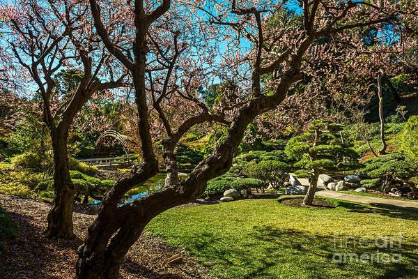 Wall Art - Photograph - Japanese Spring Garden by Jamie Pham