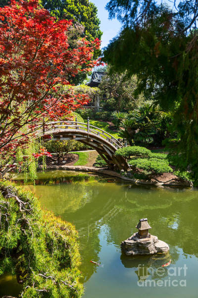 Koi Pond Photograph - Japanese Spring - The Japanese Garden Of The Huntington Library. by Jamie Pham