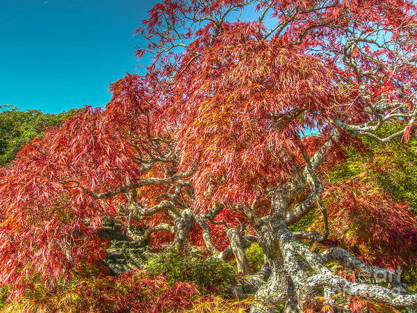 Photograph - Japanese Tree  by Dale Powell