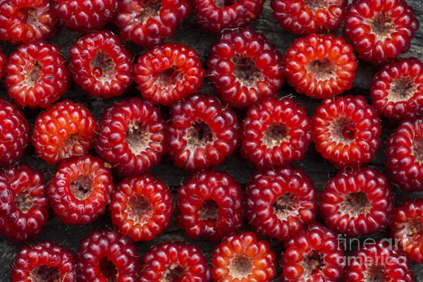 Rosaceae Wall Art - Photograph - Japanese Wineberry Pattern by Tim Gainey