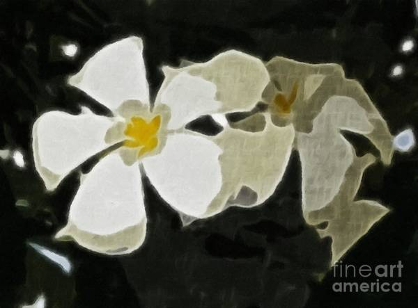 Jasmine Tea Photograph - Jasmine Expressive Brushstrokes by Barbara Griffin