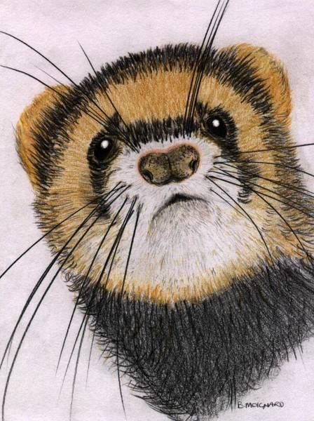 Ferrets Drawing - Jasper by Barbara Moignard
